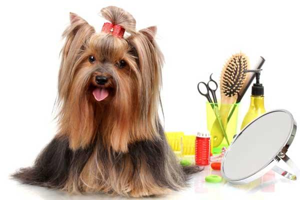 cosmetica-veterinara-catel