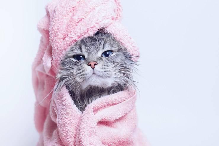 se poate spala pisica si cat de des trebuie sa o facem